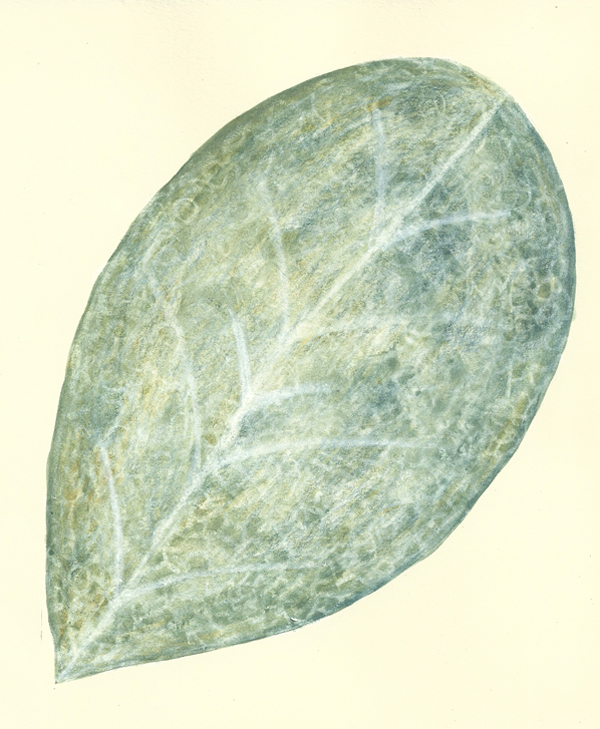 leaf  a day 12th Feb - Judy Oakenfull