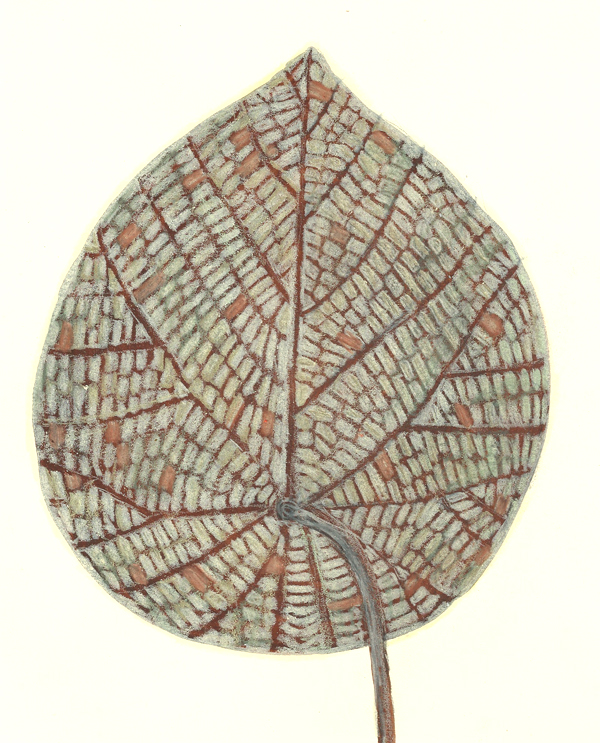 leaf a day 16/2 - Judy Oakenfull