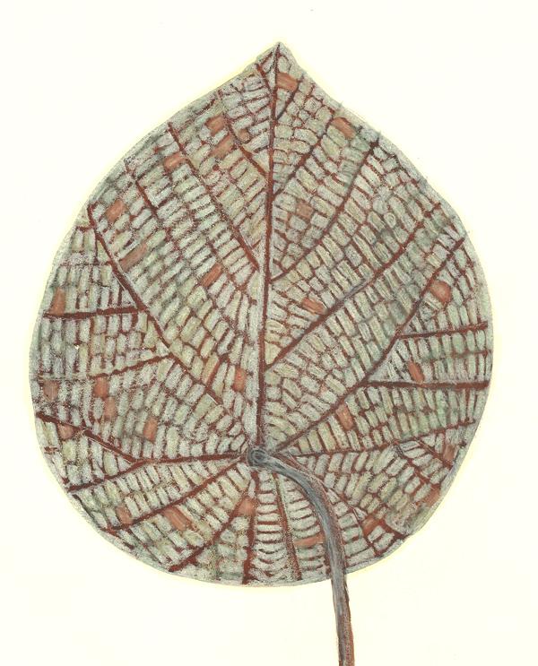 leaf a day 16/2 - Judy Oakenfull