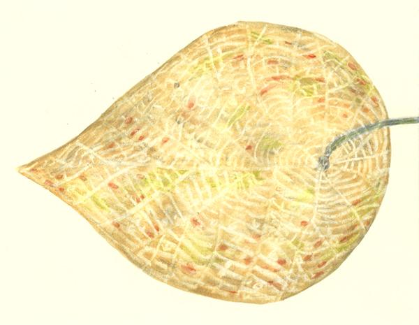 leaf a day 18-2 - Judy Oakenfull