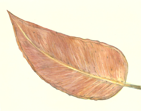 leaf a day 19-2 - Judy Oakenfull