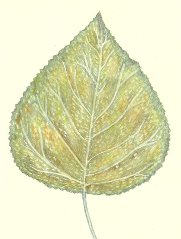 leaf 22-2