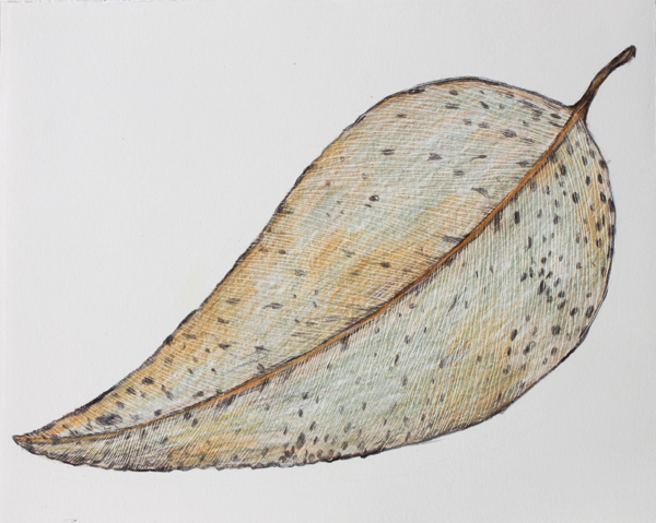 Leaf a day 11-2 - Judy Oakenfull
