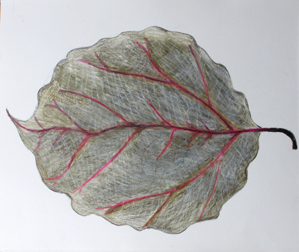 leaf a day 9:2:14 - Judy Oakenfull