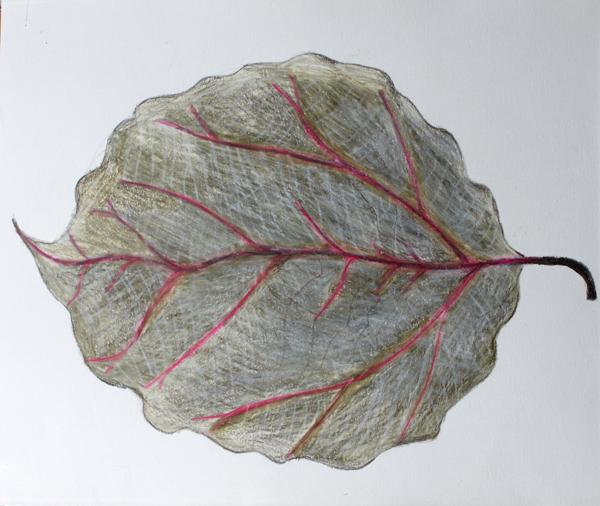 leaf a day 9:2:14 - Judy Oakenfull